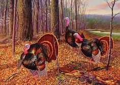 Wildlife art limited edition prints with hidden animals by wildlife artist Randy McGovern of Shown here are 4 limited edition prints of Wild Turkeys - all include hidden animals in backgrounds. Turkey Pics, Turkey Art, Wild Turkey, Tom Turkey, Turkey Drawing, Turkey Painting, Wildlife Paintings, Wildlife Art, Rock Club