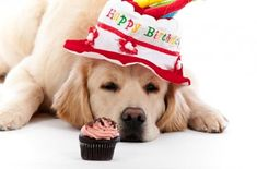 In this Post we're sharing a beautiful collection ofHappy Birthday Dogs Cards Images. Get Free Happy Birthday Quotes, Wishes, Cards, SMS Messages,