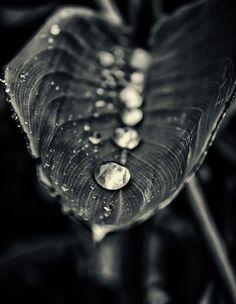 row drops