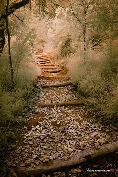 Magic Photograph - Magic Path II by Cristo Bolanos