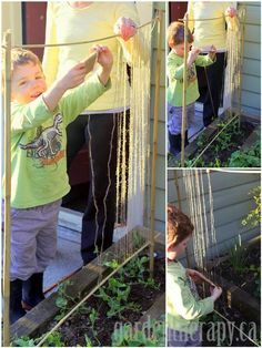 Pea Trellis project so easy you can do it with kids. Looks so easy! Can't wait to see my peas creeping up the twine.I'm such a dorK! I know I'm simply amused by the simplest things:) Pea Trellis, Garden Trellis, Outdoor Projects, Garden Projects, Garden Ideas, Edible Garden, Vegetable Garden, Organic Gardening, Gardening Tips