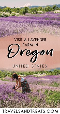 Portland day trip to a lavender farm in Oregon. Things to do when you visit Portland, Oregon. Hood River Lavender Farm is an easy day trip from Portland.