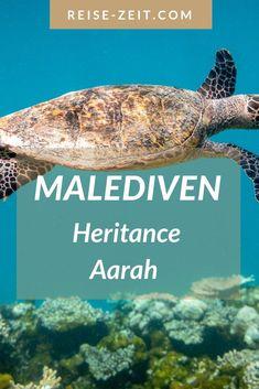 Malediven Reise-Tipp. Ich stelle dir ein neues 5-Sterne-Resort auf den Malediven vor: Heritance Aarah! Ein Paradies nicht nur für Schildkröten-Taucher 🥰 Für mich war es ein überwältigendes Erlebnis 🐢🐟🦀🐠🐡🐢 Erfahre mehr über die Luxus Insel- in meinem neuen Blogartikel: Travel Agency, Beautiful Islands, Dream Vacations, Places To See, Explore, City, Tricks, World, Have Fun