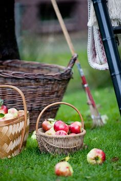 apple picking in the garden