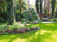 Zdjęcie numer 4 w galerii - Projekty ogrodów: ogród leśny