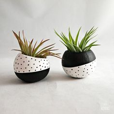 Air Plant Pod Inverse Set // Black White Spots (with Air Plants) USD) by seaandasters Air Plants, Potted Plants, Indoor Plants, Cactus Plants, Painted Plant Pots, Painted Flower Pots, Deco Floral, Pottery Painting, Cacti And Succulents