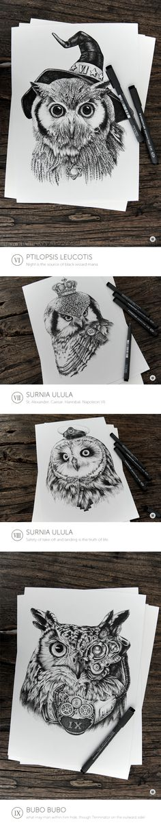 Owl on Drawing Served