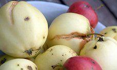Suu sügiseselt magusaks: maitsvate ja mahlaste õunakookide retseptid