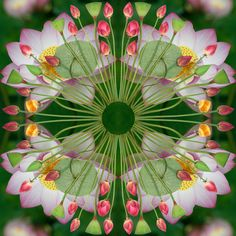 the most beautiful flower Mandala . made in New Zealand by Sally then photographed superbly ...