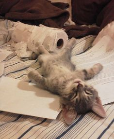 To function properly a paper shredder needs to rest for 18 hours per day !