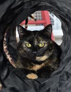 Magnolia has been our care since February, and feels it's high time her forever family came along. Super playful, affectionate Magnolia often acts younger than her age of one year; she will play all day long, then cuddle up for some love and snuggles. One of Magnolia's favorite things to do is hide in her tube, then when someone walks by, she will run out and gently tap their foot. Doesn't she sound like a dream boat? Find out more by clicking her picture.