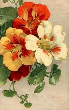 nasturtium art by Catherine Klein Botanical Drawings, Botanical Illustration, Botanical Prints, Watercolor Flowers, Watercolor Paintings, Carillons Diy, Catherine Klein, China Painting, Arte Floral