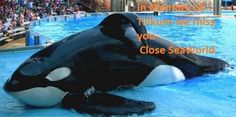 3 of SeaWorld's captive killer whales have died this year, including Tilikum. No more orcas should suffer this fate. (63663 signatures on petition)