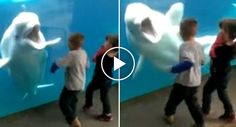 Baleia Branca Capta a Atenção De Todos Ao Brincar Com 2 Crianças