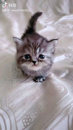 Funny Cute Cats, Cute Baby Cats, Funny Cats And Dogs, Kittens And Puppies, Cute Cats And Kittens, Cute Funny Animals, Cute Baby Animals, Kittens Cutest, Cute Kitty