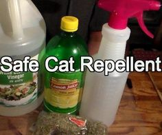Learn to make friendly (but Effective) cat repellent with ingredients you have at home.This spray is safe to use on your furniture and all other indoor and outdoor items and plants. This spray is great for training your cat or repelling the neighborhood Cat Repellant Outdoor, Cat Deterrent Spray, Cat Repellant Garden, Raccoon Repellent, Cat Care Tips, Pet Care, Pet Tips, Keep Cats Away, Cleaning Tips