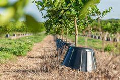 Tree T-PEE, un contenedor que ayuda al crecimiento de los cultivos un 30% reduce las necesidades de agua, fertilizante y combustible hasta el 90%.