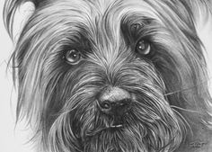 COPYRIGHT 2016 All images contained on this web site are under copyright protection by RYAN DOUGLAS JACQUE and may not be reprinted, copied or used in any manner without the prior written consent. Kinds Of Dogs, Dog Portraits, Dog Art, Wildlife, This Or That Questions, Artist, Image, Pencil, Cat