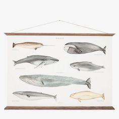 Plakat Whales Poster | Bolina Interiørbutikk + Møbler, Klær og Accessories – Bolina.no