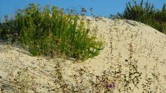 Susie Sun 2011 posted a photo:  (Jardins outonais das dunas - foto sem edição)  Dunes - Lagoa da Conceição / Florianópolis / SC / Brasil  My Flickr Hive Mind best photos and digital work:  flickrhivemind.net/User/Susie%20Sun%202011/Interesting