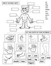 English worksheet: BODY PARTS