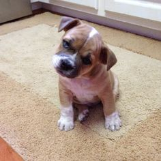 someone buy me this little guy