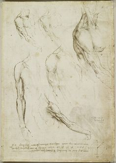 Leonardo da Vinci, 1452-1519, Italian, The muscles of the shoulder and arm, c.1510-11. Pen and ink.on paper. Royal Collection Trust, Windsor.