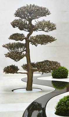 09.05.13 The Moon Tree & the Garden of Illusion | Tom Stuart-Smith
