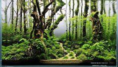 Underwater forest. Planted aquarium.