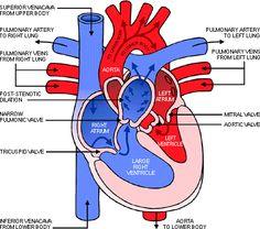 venn diagram of catabolic and anabolic pathways