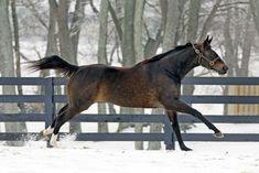 Rare & Unfamiliar Horse Breeds! - Page 4 - Zenyatta.com Forums