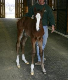 Union Rags as a foal