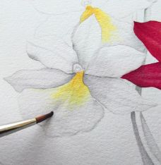 Acuarela - How to paint watercolour botanicals – part one - How To - Artists & Illustrators - Original art for sale direct from the artist Watercolor Flowers, Watercolour Painting, Painting & Drawing, Watercolor Tips, Watercolours, Painting Trees, Watercolour Tutorials, Watercolor Techniques, Original Art For Sale