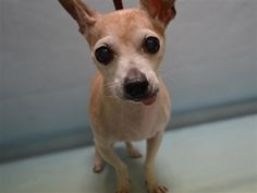 SAFE- TJ - 15219 - - Manhattan TO BE DESTROYED 12/18/17**ON PUBLIC LIST** - Click for info & Current Status: http://nycdogs.urgentpodr.org/tj-15219/