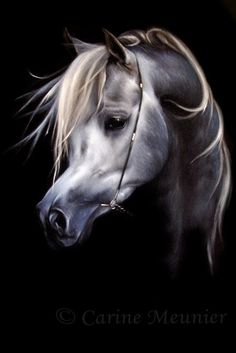 The Arabian Magazine Shop - Carine Meunier - NK Qaswarah, Arabian Art, Arabian Horses, Marwari Horses, All About Horses, Equine Art, Horse Art, Art Pictures, Sketches, Black And White