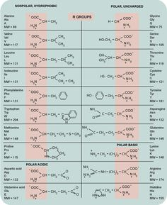 Amino acids chart, handy for any biochem major