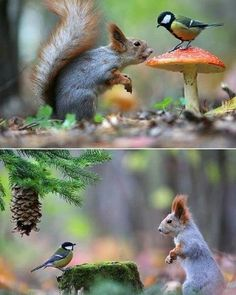 Pin by Katja Schaefer on outdoor Nature Animals, Animals And Pets, Baby Animals, Beautiful Creatures, Animals Beautiful, Cute Squirrel, Squirrels, Wale, Tier Fotos