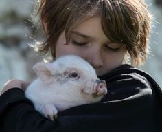 Pet Pigs are Becoming Increasingly Popular in the United States