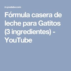 Fórmula casera de leche para Gatitos (3 ingredientes) - YouTube