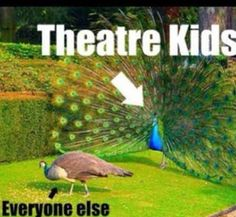Peacocks are the theatre kids of the animal world. Honestly Though