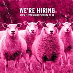 Looking for a social media intern based in Cape Town to join our herd.