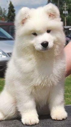 5 Most affectionate dog breeds