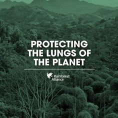 Help us protect the lungs of our planet.