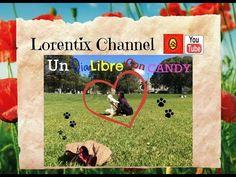 Dia libre con mi Perrita Candy, Coton de tulear, Hallandale I Lorentix - YouTube