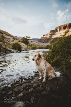 river bank pup (Sam Brockway / Boise, ID / US) #Canon EOS 6D #animals #photo #nature River Bank, Cool Photos, Pup, Explore, Canon Eos, Dogs, Nature, Animals, Naturaleza