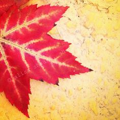 4x4 minimalist art nature photography (fall leaves, primary colors, modern wall decor)