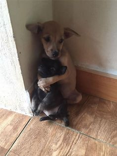 stray-puppies-embrace-rescued-1