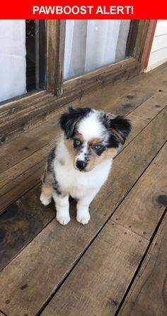 Please spread the word! Rowdy was last seen in Dallas, TX 75229.  Description: Puppy, friendly  Nearest Address: 3008 Merrell Road, Dallas, TX, United States