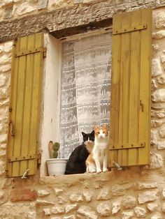 Cats in window of an old stone house, Abruzzo   Flickr: #abruzzoruralproperty www.abruzzoruralproperty.com