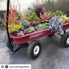 We are raffling all these items for Succulent Extravaganza They are a fun interest piece in any American home, a conversation… Succulent Landscaping, Succulents Garden, Garden Plants, What A Wonderful World, Wonders Of The World, Garden Tools, Landscape, Conversation, Fun